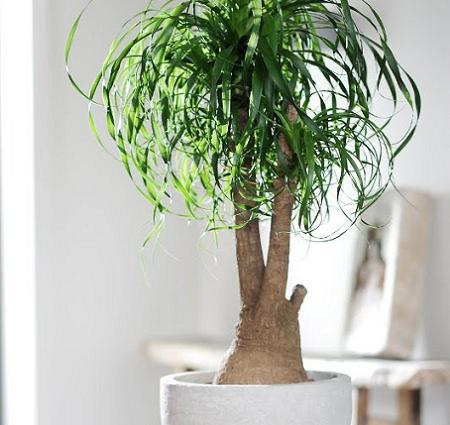 Plantas decorativas decoraci n for Plantas decorativas de interior con poca luz