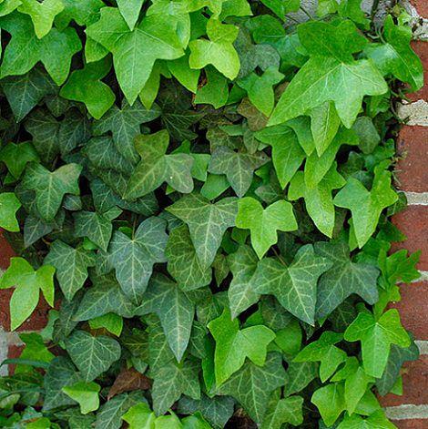 Qu plantas de exterior son resistentes al fr o decoraci n - Plantas de jardin exterior ...