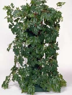 Las 20 mejores flores y plantas para tu sal n decoraci n - Plantas colgantes interior ...